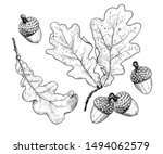 dry oak leaves and acorns. ink ... | Shutterstock .eps vector #1494062579
