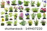 Various Garden Plants And...