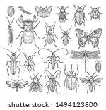 insects sketch. butterfly ... | Shutterstock .eps vector #1494123800