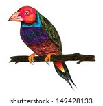 bird. pen color drawing on... | Shutterstock . vector #149428133