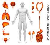 internal organs   human anatomy | Shutterstock . vector #149433800