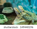 Pair Of Tropical Lizards In Th...
