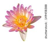tropical lotus flowers | Shutterstock . vector #149458388