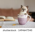 Stock photo cut kitten in cup at home cat at comfort home autumn fall 1494647540