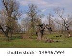 landscape of oak grove in the... | Shutterstock . vector #149467994