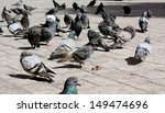 Flock Of Pigeons   A Flock Of...