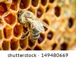 Close Up Of Bees In A Beehive...