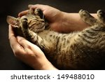 Stock photo tabby cat in the hands of the owner 149488010