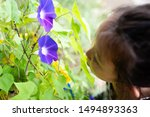 Child Looking At Morning Glory...