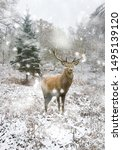 Small photo of Beautiful red deer stag in snow covered Winter forest landscape in heavy snow storm