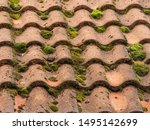 Moss Growth On Terracotta Roof...