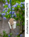 Sparrow Wild Bird Perched On A...