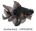 Black  Goldfish Isolated On...