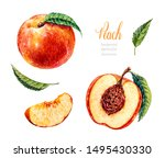 Watercolor Peach. Botanical...