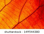 closeup texture of a red leaf ... | Shutterstock . vector #149544380