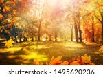 maple leaves and trees in park  ... | Shutterstock . vector #1495620236