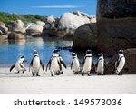 Jackass Penguin March