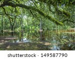 bald trees reflecting in the...   Shutterstock . vector #149587790