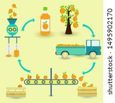 orange juice production steps.... | Shutterstock .eps vector #1495902170