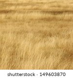 Grassland Background   Texture...