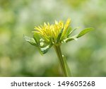 close up of a yellow flower against a green smooth background  - stock photo