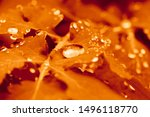 Red Autumn Leaves With A Drop...