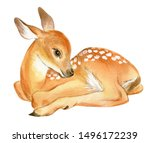 Watercolor Baby Deer. Hand Painted Fawn Illustration isolated on white background.