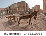 A Pulling Cart Donkey Is...