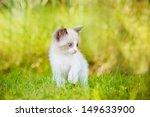 Stock photo siamese kitten outdoors 149633900