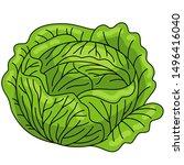 cabbage. healthy food. diet.... | Shutterstock . vector #1496416040