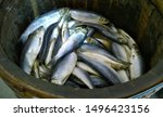 Stock photo herring fish in a wooden board boxed salted herrings in the local market or in the supermarket for 1496423156