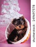 yorkshire terrier puppy ...   Shutterstock . vector #149697578