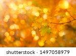 Autumn Orange Leaves Over...