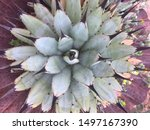 Succulent Plant Green And...