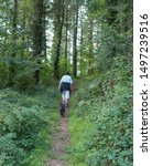 Stock photo female walker and a black schnoodle dog walking up a hill on a summer day in eggesford forest 1497239516