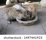 Stock photo feeding rabbits cute young rabbits are eating readymade rabbit food from a tray in rabbits farm 1497441923