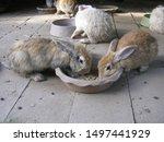 Stock photo feeding rabbits cute young rabbits are eating readymade rabbit food from a tray in rabbits farm 1497441929