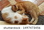Stock photo cute baby kitten sleeping on the floor cute kitten brown white hairs color 1497473456