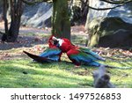 Two Cute Green Winged Macaws On ...