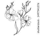 vector flax floral botanical... | Shutterstock .eps vector #1497541376