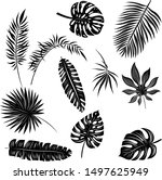palm leaves set black and white | Shutterstock .eps vector #1497625949