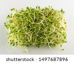 red clover sprouts and radish...   Shutterstock . vector #1497687896