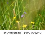 closeup of purple and yellow wildflowers in a tall grass meadow