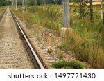 Stock photo hare crosses the railway bunny hare crosses the road wild hare on the railway 1497721430