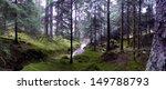 Cumbria Forest  Uk
