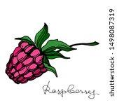 vector raspberry healthy food... | Shutterstock .eps vector #1498087319