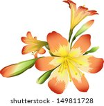 flowers freesia  not auto... | Shutterstock .eps vector #149811728