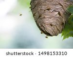 Yellowjacket Wasps Swarm On And ...