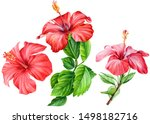 Set Of Hibiscus Flowers Painted ...