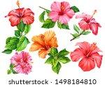 Big Set Of Hibiscus Flowers...